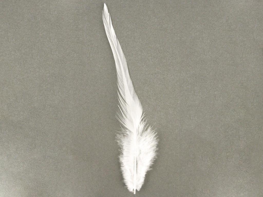 Dekoratiivsuled Rayher Trendy 10-15cm 2g valge